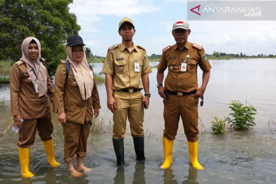 Petani Tanah Bumbu terancam gagal panen akibat banjir