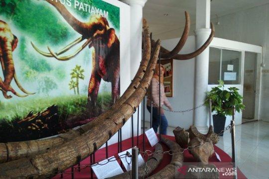 Fosil Purba Museum Patiayam ikut pameran Museum Ronggowarsito