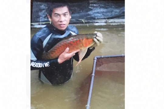 Komunitas ajak saksikan kontes ikan arwana di Kapuas Hulu