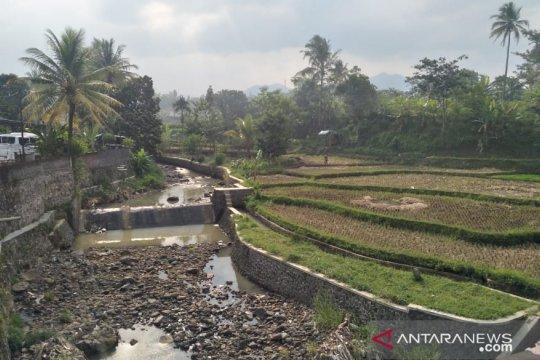Puluhan hektare sawah di Cianjur alami gagal panen