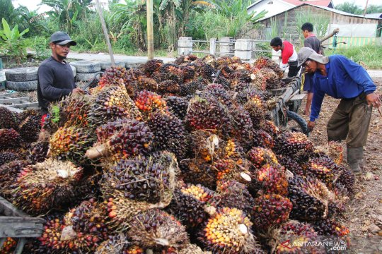 Harga minyak mentah anjlok, picu penurunan harga sawit Riau