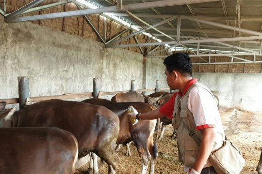 Palembang mulai mengerahkan petugas untuk periksa hewan kurban