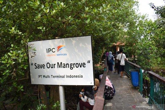 Pemprov DKI tanam mangrove guna memperbaiki kualitas lingkungan