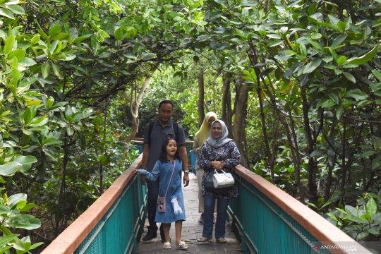 Wisata murah ekowisata mangrove DKI Jakarta