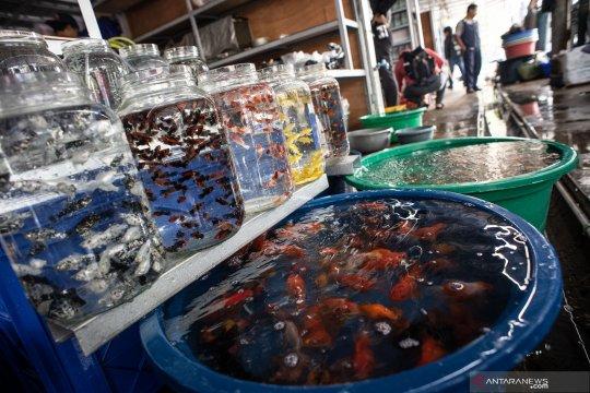 Relokasi pedagang ikan hias di Jatinegara
