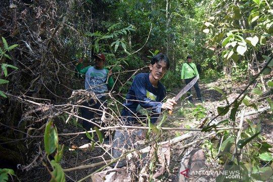 Hutan Rimbang Baling dan Dubalang pengawalnya