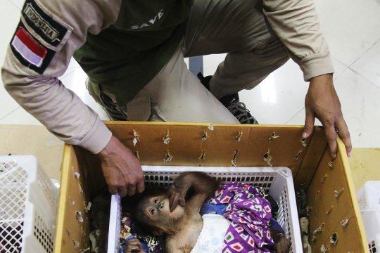 Bea dan Cukai gagalkan usaha penyelundupan hewan dilindungi