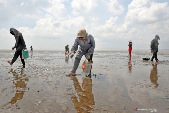 Pemerintah perlu peta jalan pemberdayaan perempuan nelayan