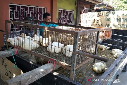 Akibat harga turun, peternak bagikan ayam ke warga