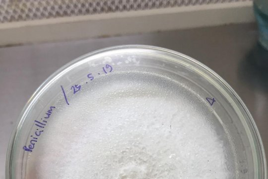 IPB bagikan cendawan endofit perkuat akar padi hadapi kemarau