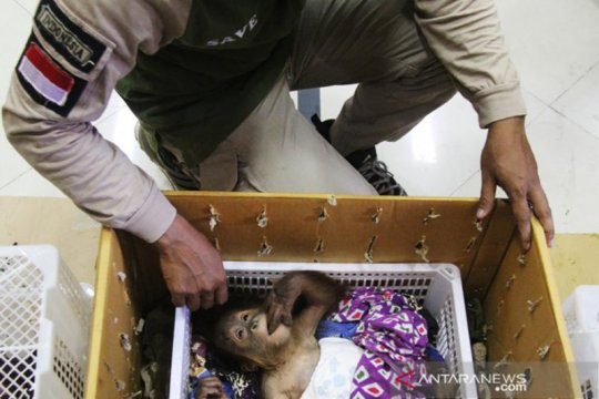 Kandang BBKSDA Riau tempat merawat orangutan korban penyelundupan