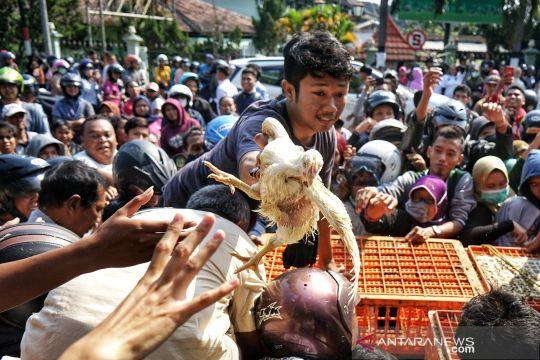 Pembagian gratis ayam karena harga anjlok