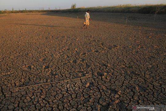 Embung mengering di Balongan, ratusan hektare lahan sawah terancam gagal panen
