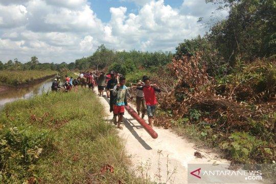 Masyarakat Selakau gotong-royong angkut tiang listrik demi penerangan