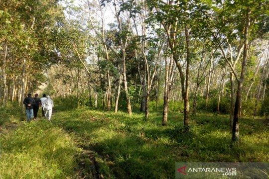 Potret pengelolaan hutan tanaman rakyat di Lubuk Seberuk