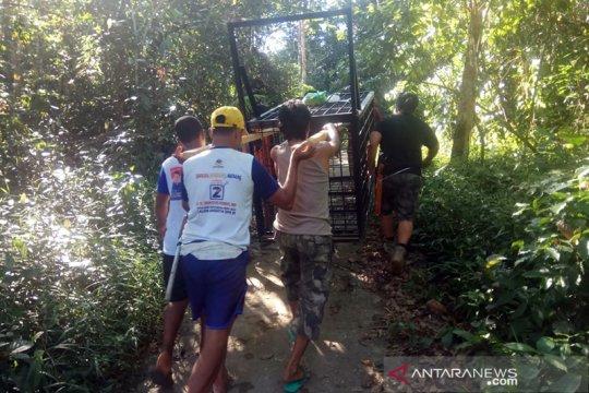 BBKSDA Riau pasang perangkap untuk beruang yang serang petani