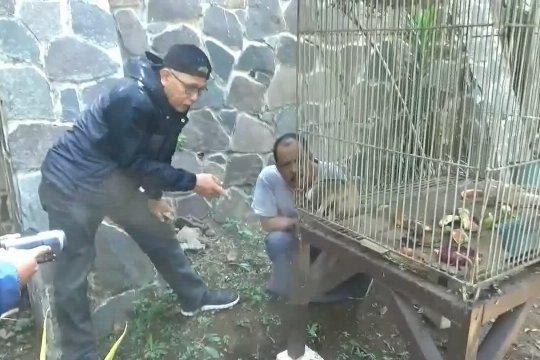 Warga serahkan seekor kukang Jawa ke BKSDA Jabar