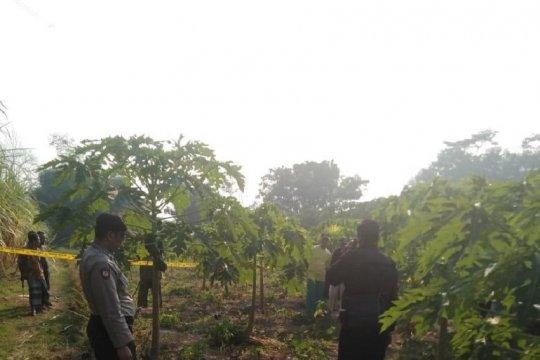 Polisi masih selidiki temuan pria meninggal di kebun pepaya