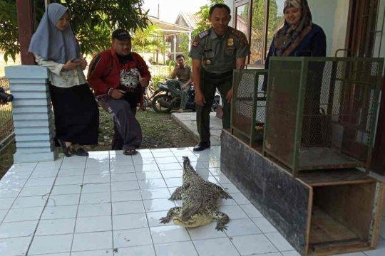 BBKSDA Jawa Barat terima buaya, kukang, dan kucing hutan dari warga