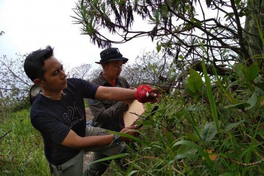 Eksplorasi IPB-KSDAE temukan mikroba bermanfaat untuk pertanian