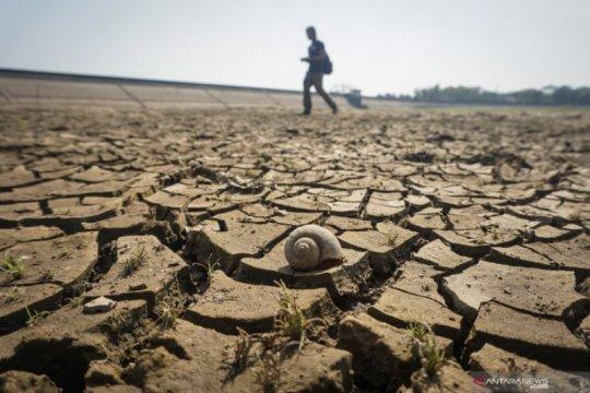 Lahan pertanian di Dlingo Bantul terdampak kekeringan akibat kemarau