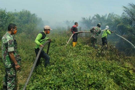 12 hektare kebun sawit di Nagan Raya Aceh terbakar
