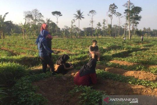 IPB diseminasikan mikroba dari Gunung Ciremai untuk pertanian