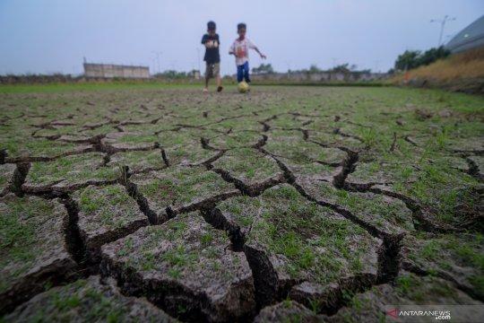 29.913 hektare sawah di Jawa Barat terdampak kekeringan