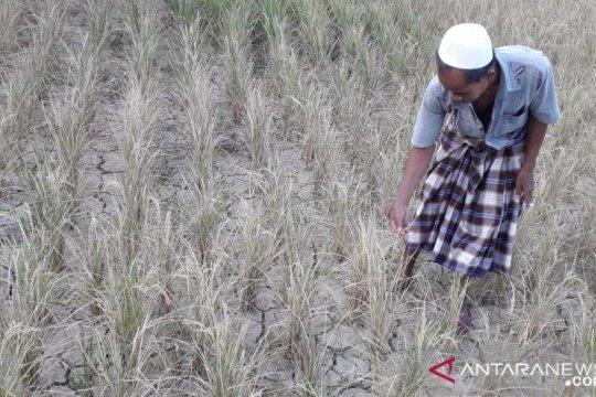Beberapa kecamatan di Sukabumi mengalami kekeringan