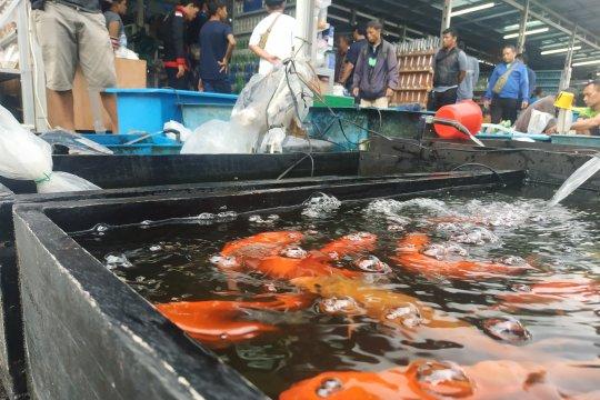 Pedagang ikan hias Jatinegara senang direlokasi