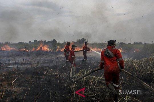 Hentikan pembakaran hutan dan lahan!