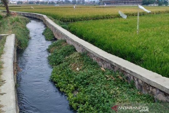 Petani tidak mampu bayar PBB karena sawah tercemar limbah