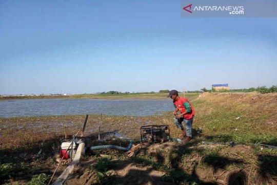 Ribuan hektare tanaman padi di Indramayu terancam gagal panen