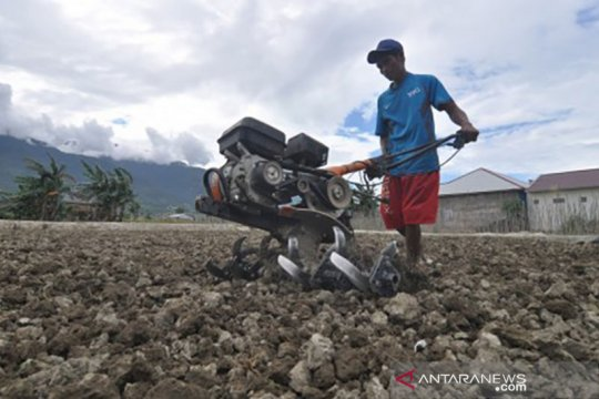 Lahan sawah di Palu merosot, salah satunya akibat bencana