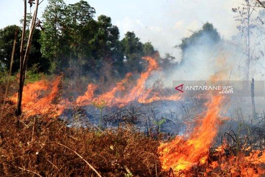 Kebakaran meliputi 50 hektare lahan gambut di Aceh Barat
