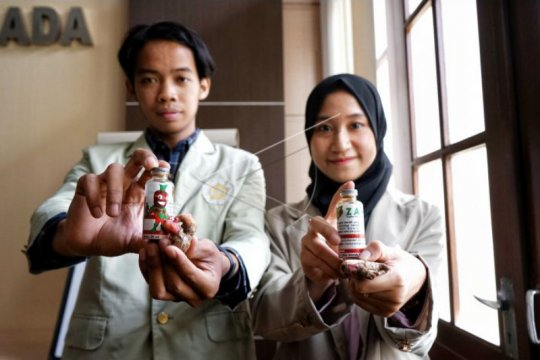 Mahasiswa UGM kembangkan formula penghambat penyakit ginjal dari jahe