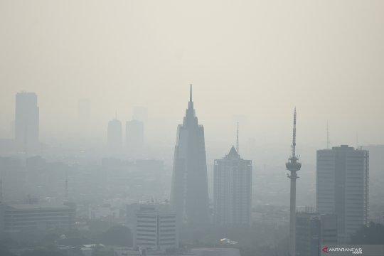 Greenpeace: lidah mertua bukan solusi tepat atasi polusi udara Jakarta