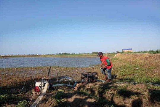 11.000 hektare sawah di Indramayu  kekeringan