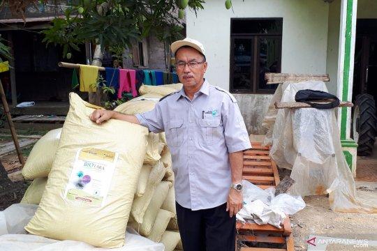 """""""Biotara"""" tingkatkan hasil padi di rawa"""