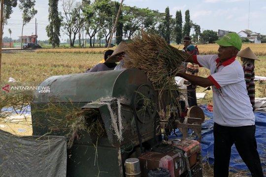 Meski 3 bulan tak turun hujan, petani di Malang malah mulai panen