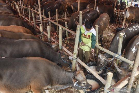 Jaktim hanya izinkan penampungan hewan kurban di zona hijau
