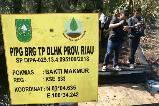 BRG segera tambah infrastruktur pembasahan gambut di Riau