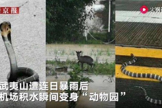 Bandara di Fujian berubah jadi selter binatang liar