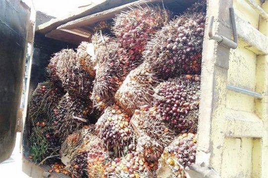 Malaysia akan ajukan keluhan ke WTO terkait kebijakan kelapa sawit UE
