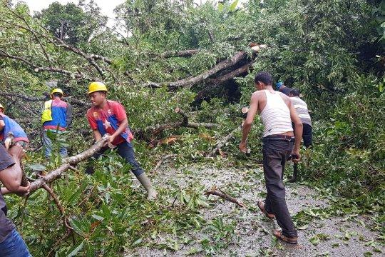 Aceh Besar dilanda hujan es disertai pohon tumbang