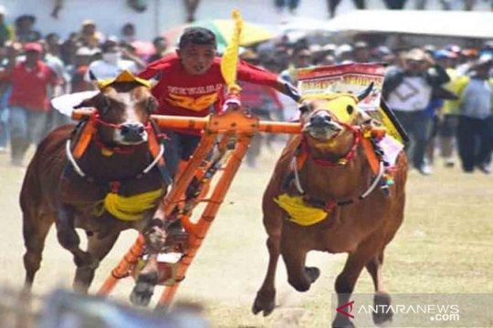 Bangkalan akan gelar Karapan Sapi Piala Presiden 2019