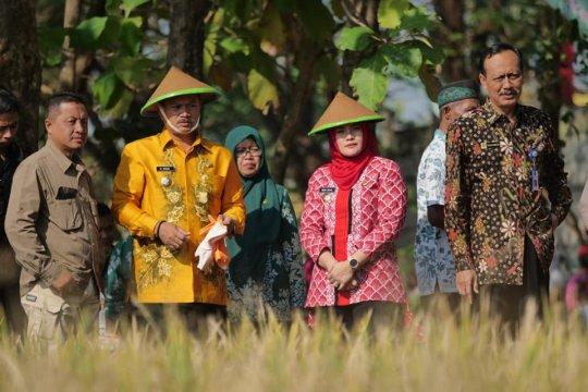 "Pemkot Madiun berencana manfaatkan ""lahan bengkok"" untuk tanaman cabai"