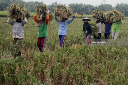 Kementan dorong penyuluh percepat pertumbuhan korporasi pertanian