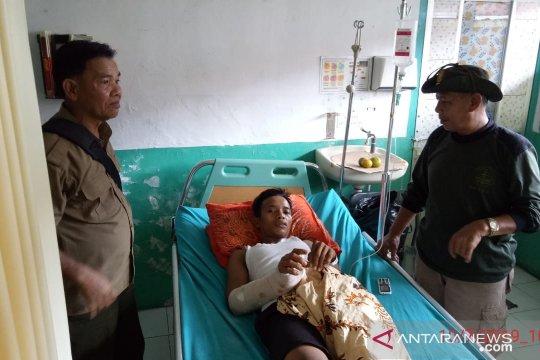 Korban serangan beruang dirujuk ke RS di Pekanbaru