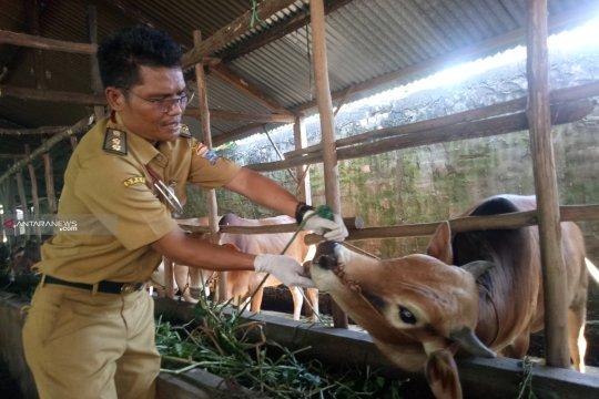 25 persen hewan kurban di Palembang tak penuhi syarat